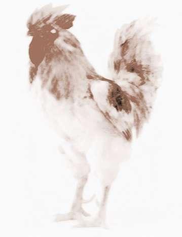 孕妇梦见两只鸡打架