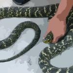 梦见蛇缠左手指