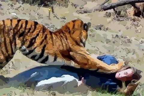 夢見老虎撲倒人