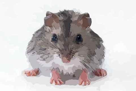 夢見老鼠咬我手