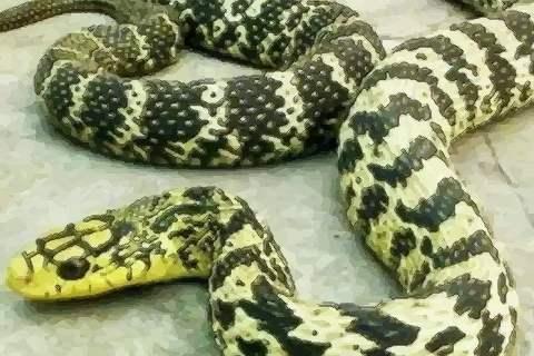 梦见蛇爬身上
