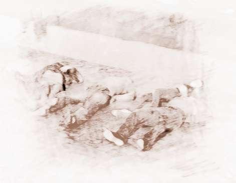 周公解梦梦见两只狗打架鲜血满地