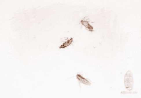 梦到吐出虫子 周公解梦梦见吐白虫子