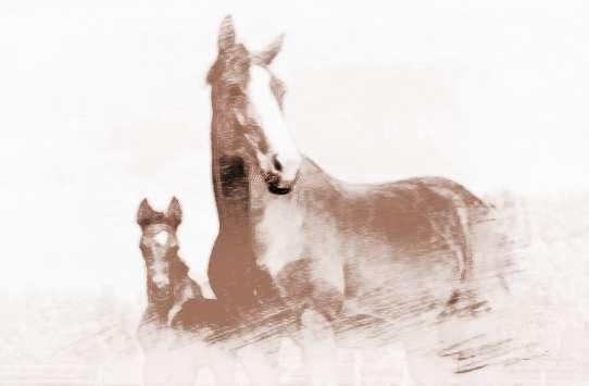 梦见天上有马