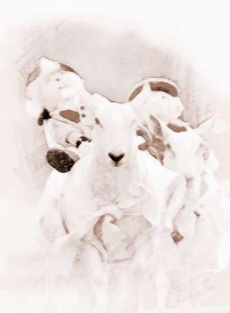 梦见追打绵羊