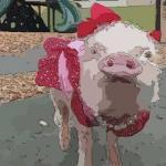 梦见猪来家里
