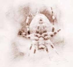 梦见蜘蛛咬人