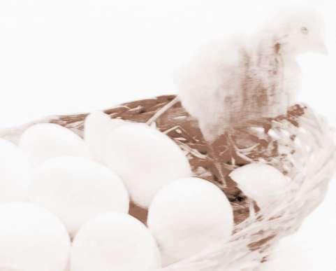 梦见收鸡蛋