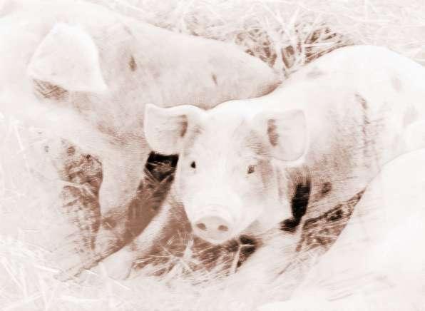 梦见把猪圈屋里去了怎么办
