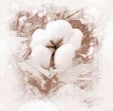 梦见白棉花