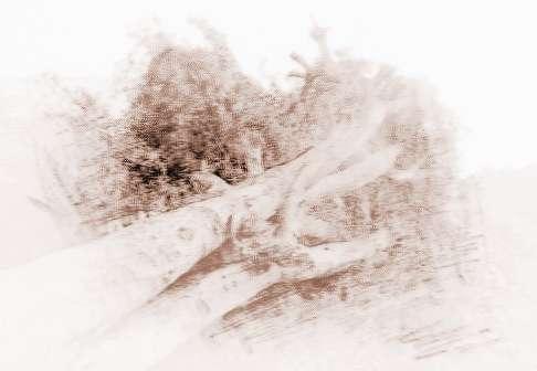 梦见山上树木被别人砍了