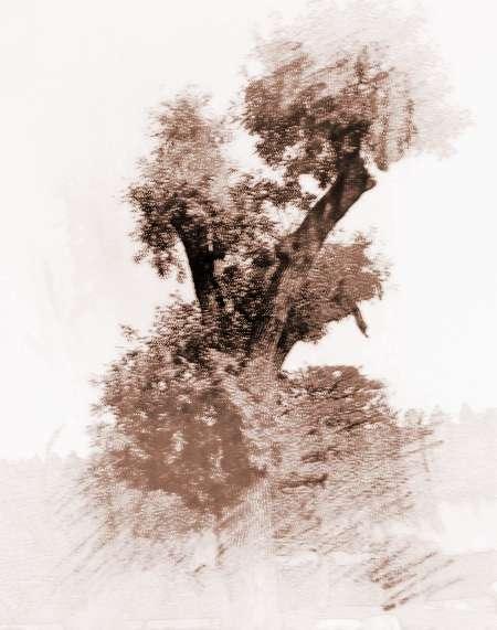 梦见大树很高