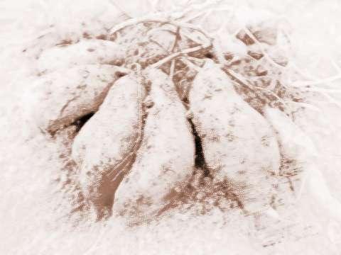 薯是什么意思 周公解梦