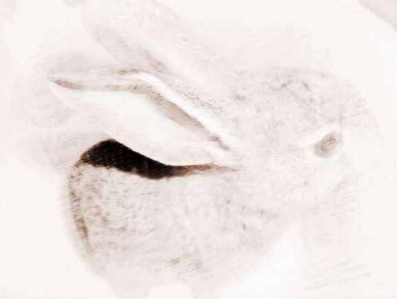 梦见抓兔子 梦见在猎犬的协助下