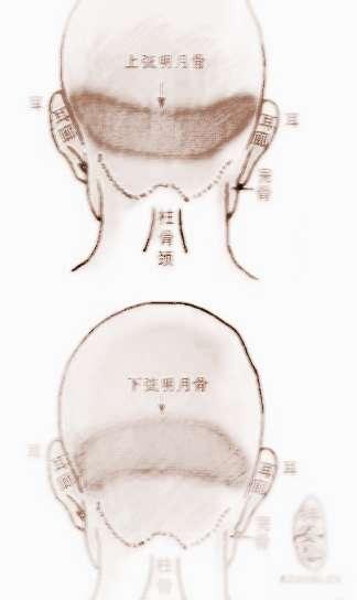 骨相学-两弦明月骨