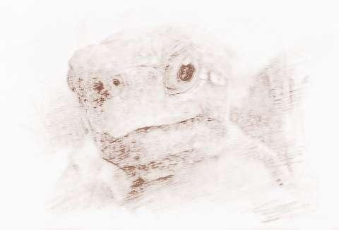 面相图解龟眼