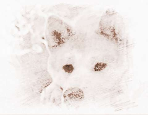 秋田犬为什么name可爱