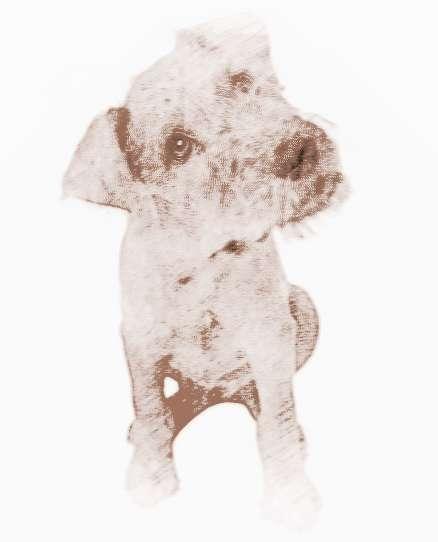 正能量的女宠物狗狗名字