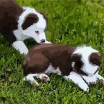 活泼可爱的宠物狗狗取名字大全有哪些