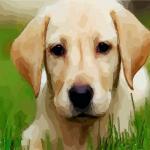 好听的狗狗名字大全 如何给狗狗起名字