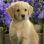 狗狗名字大全2020最新版的 狗狗怎么起名字