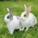 宠物兔子起名大全 兔子宠物名字怎么取