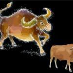 牛年宝宝起名 牛年宝宝取名字大全