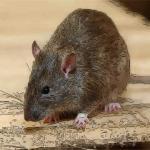 鼠年男孩新颖有涵养的名字 怎么给鼠年出生的男孩起名字