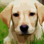 属狗的人哪天出生最好终身富贵