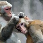 属猴的女人最配什么属相婚姻幸福