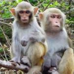 属猴者出生月的命运几月好命运