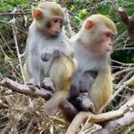 腊月出生的属猴女命怎么样会不会很苦