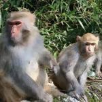 娶老婆快看女属猴的和什么属相最配