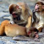 看看适婚年龄的属猴女和哪个生肖最配