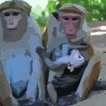 正月出生的属猴人命运好吗苦不苦