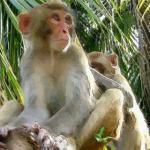 属猴女与什么属相最合适婚后和谐