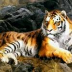 1998年出生的属虎人命运是不是命苦之人