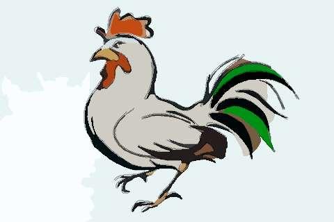 屬雞人2020年生肖運程預測
