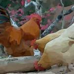 解析一下农历6月出生属鸡人命好吗