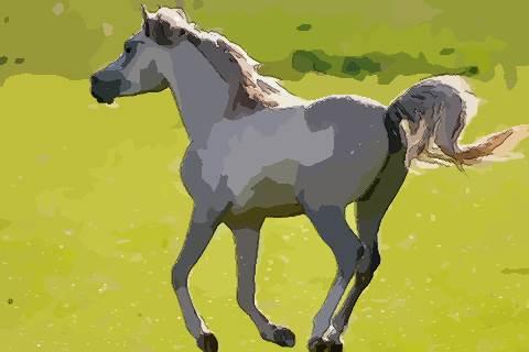 属马的人今年多大了2021 2021年属马人几岁呢