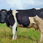 农历4月出生属牛人命好吗仔细看完