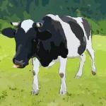 生肖牛的性格特点都在这你了解吗