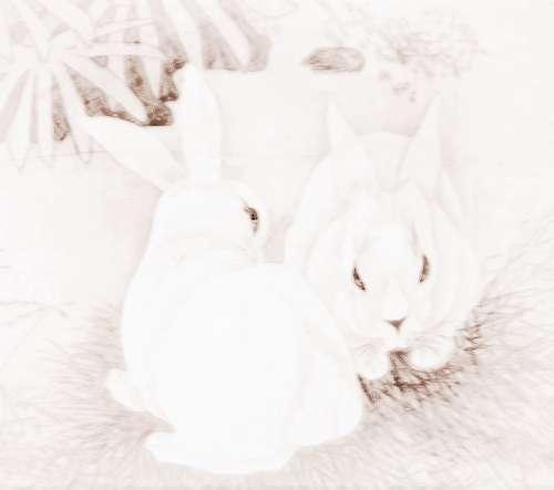 十二生肖兔的年份