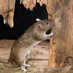 农历2月出生属鼠人命好吗想看就来吧