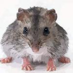 农历十月出生的属鼠人命运怎么样清楚吗