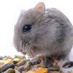 十月出生的属鼠人命运好吗是否坎坷