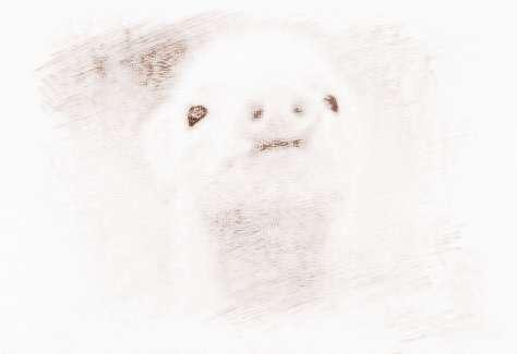 可爱属猪宝宝图片