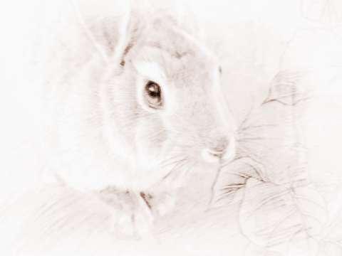 属兔的人适合什么职业