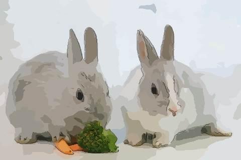属兔的人哪天出生好 生肖兔在哪几天出生好命
