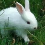 属兔人出生时辰大解析最好的时辰